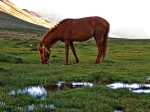 A horse in Broghil valley
